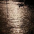 Sauvons la rivière Mbanya
