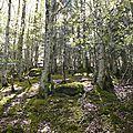 Ecosophie