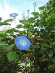 La petite vadrouille jardin romantique de bercy et - Petit jardin romantique tours ...