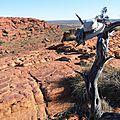 L'Outback … Acte I : D'Adélaïde à Alice Springs