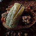 paté aux champignons et pommes de terre