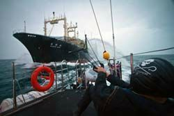 90__SSCS_crewmember_readies_the_slingshot_to_unleash_red_paint_symbolic_of_blood_on_the_factory_ship_SA7480