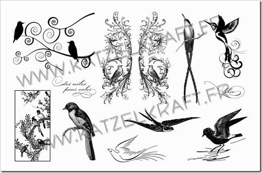 KTZ41_01 oiseaux