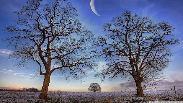 trees-under-new-moon-winter-65724
