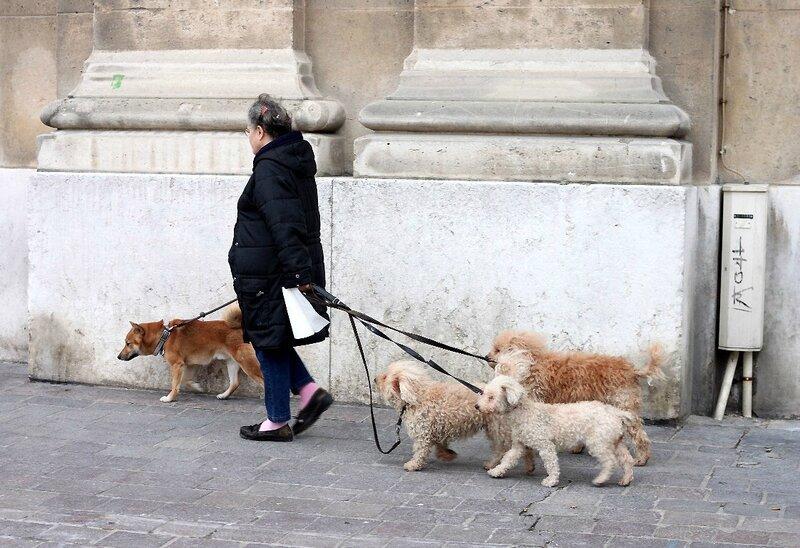 8-Promeneuse de chiens_8538