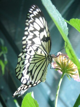 papillon_cite_des_sciences_paris