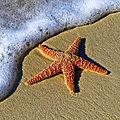 L'enfant et l'étoile de mer