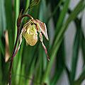 Le coin des orchidées