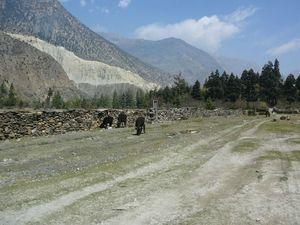 Trek Annapurna FZ1 - 0365