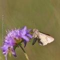 Butineur * Nectar-gatherer