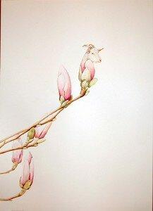 goat_magnolia_9