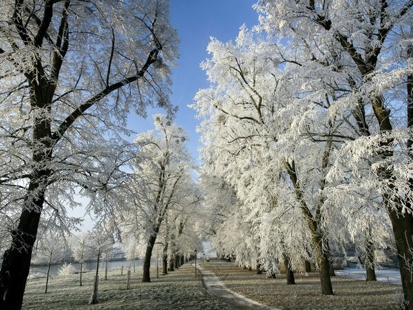 ice blue winter snow sun trees houses paths frost skies_wallpaperswa
