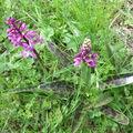 <b>Orchidée</b>.