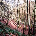 <b>Balade</b> forestière en hiver