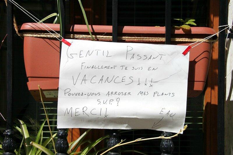8-Vacances, voisins, plante_1445