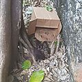 Plume, Marie, Mowgli, Major, Molly, Minnie, chatons jetés dans un carton à Petit Canal