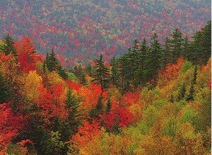 photo_foret_canada