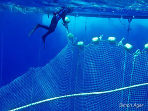 news_100617_1_5_Libyan_Waters_Tuna_Diver_and_Net_008__SA3353_