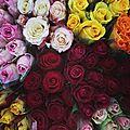 Une <b>rose</b> pour maman