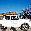 Partez en <b>4X4</b> à travers la réserve de Moremi au Botswana