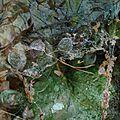 La Macula Lutea | coline termash