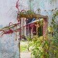 Végétation murale
