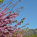 [Drôme] balade fleurie à Peyrus...