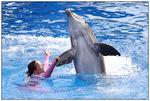 [WDW + Tourisme] Du 25 septembre au 11 octobre 2009 + WDW 2011 page 6 - Page 2 49606733_p