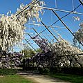 Les glycines du <b>parc</b> Balzac, ...