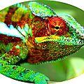 Quels sont les effets de la couleur sur les êtres vivants ?