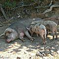 Le 18 février 2007 débute l'<b>an</b> chinois sous le signe du Cochon