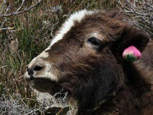 Trek Annapurna FZ28 - 0794