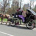 Les différentes façons de visiter Central Park