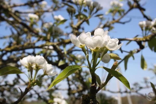 fleurs_de_printemps_003