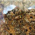 Vol de ruche à la <b>Montagne</b>