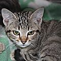 3 <b>chatons</b> riquent l'euthanasie...