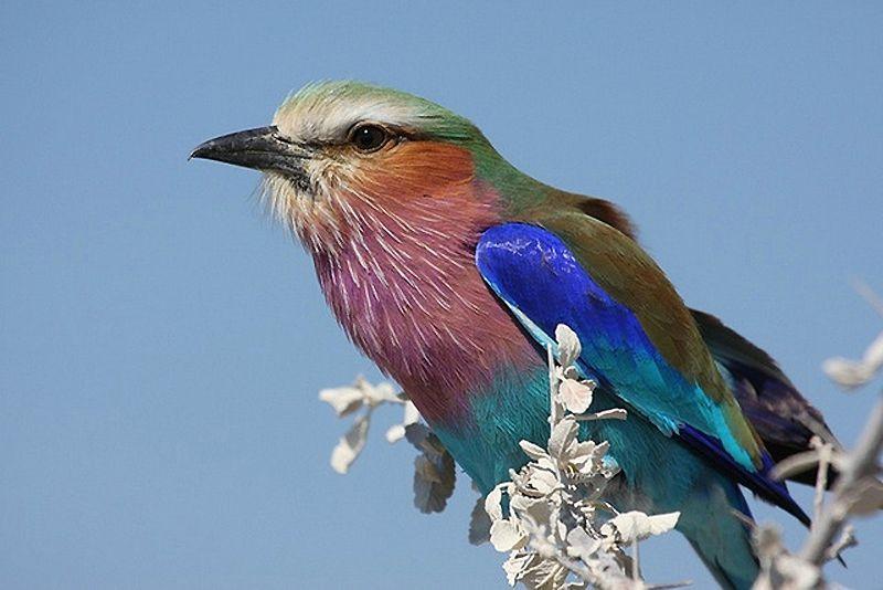 """Gilbert Bécaud - """"Le petit oiseau de toutes les couleurs"""""""