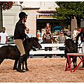 Equestria 2011 (2/9)