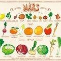Fuits et légumes du mois de Mars