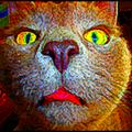 Chat Pristi ! (un blog pour décompresser)