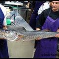 Un <b>Barracuda</b> dans la cuisine