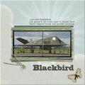 En hommage à notre ami Blackbird