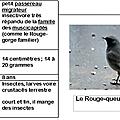 Projet <b>Oiseaux</b> : le rouge-queue noir