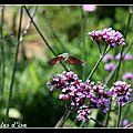 La Seigneurie gardens (I)