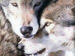 Zed_Animaux_01234