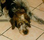 Fanny (Type Korthal) 31279219_p