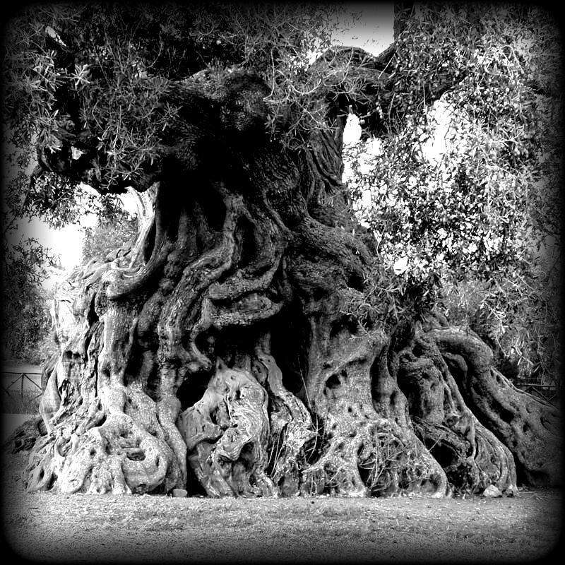 olivier-millenaire