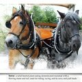 photo chevaux scrap <b>citation</b>