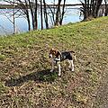 Noon, beagle