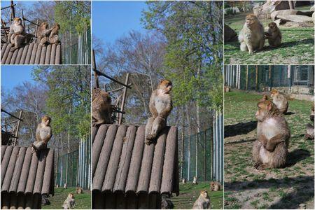 2010_04_11_zoo_de_Beauval6